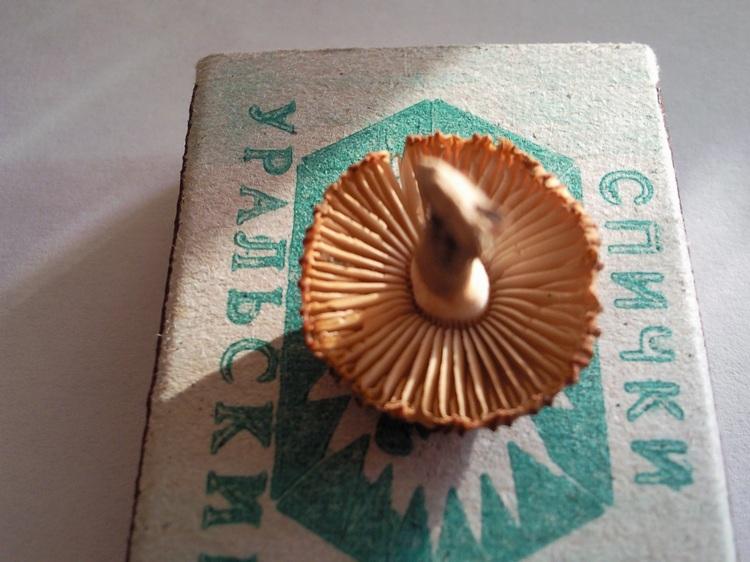 fungi.su/forum/attachments/1907.jpg