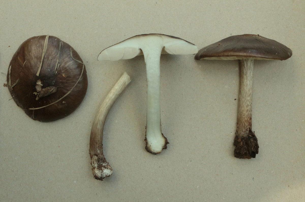 fungi.su/forum/attachments/img_0040.jpg
