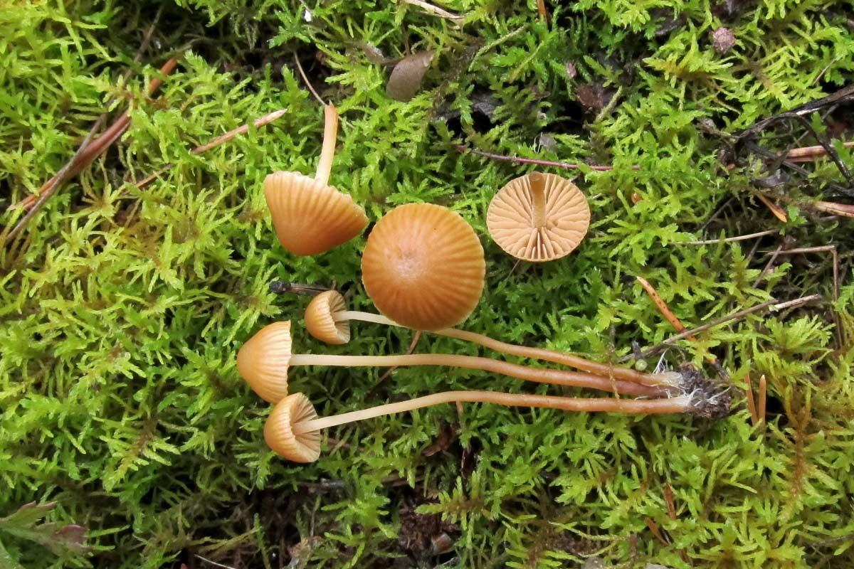 fungi.su/forum/attachments/img_2953.jpg