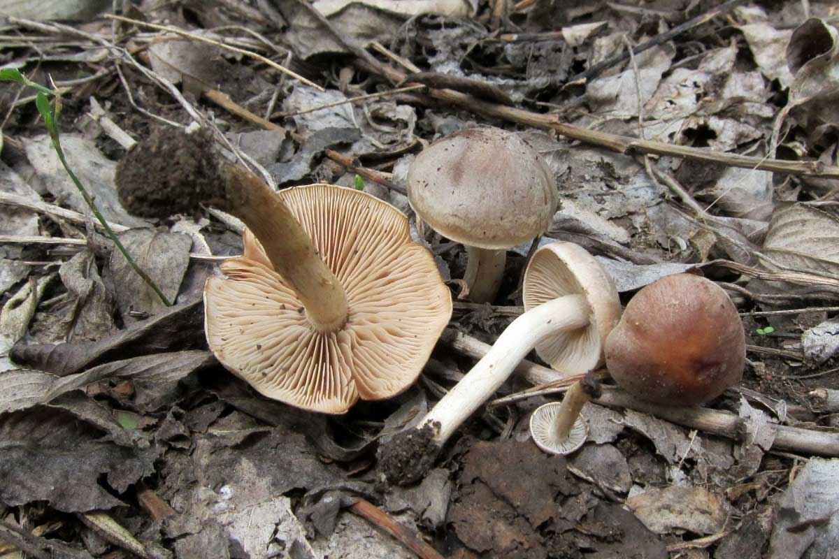 fungi.su/forum/attachments/img_3613.jpg