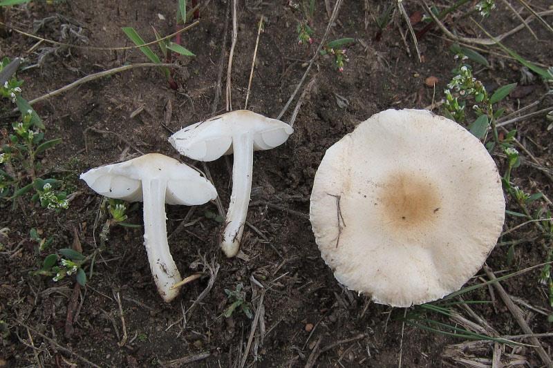 fungi.su/forum/attachments/img_4315.jpg