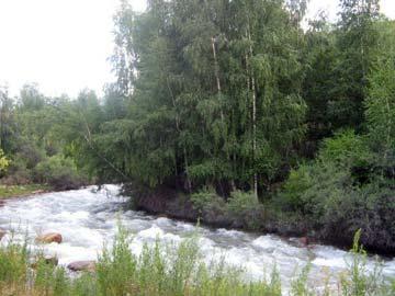 Река Каскелен и березняки