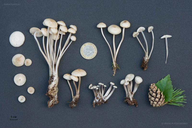 fungi.su/images/photoalbum/album_155/fungi_19_1.jpg