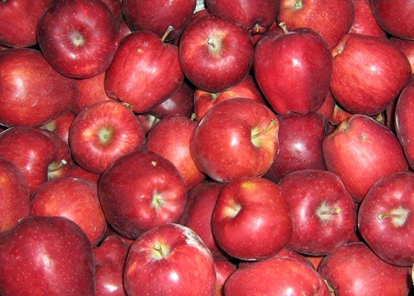 делишес сорт яблок фото